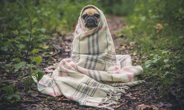 Pourquoi devriez-vous prendre une assurance pour votre animal de compagnie